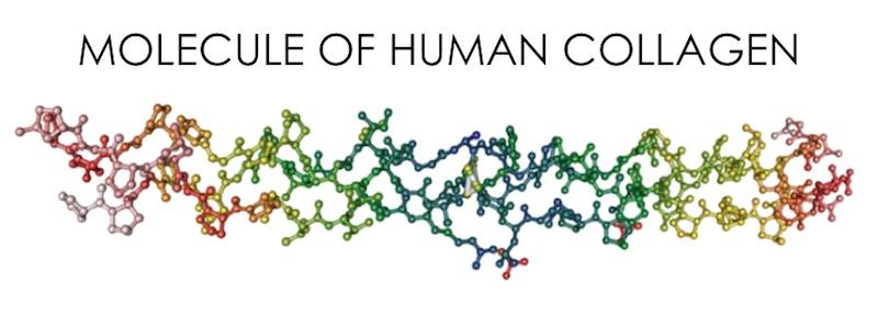 Collagen In Your Body